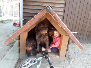 Kuno, Anka und Nelli vom Stubben mit Hundeführerin Lena